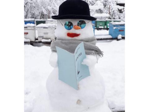 Citate despre zăpadă